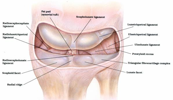 Scapholunate Ligament Tears